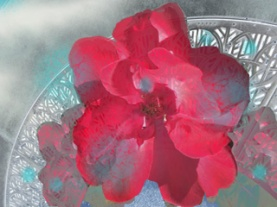 RedFlower on Grid_72dpi_320x240